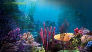 Finding Nemo Animation Kolkata